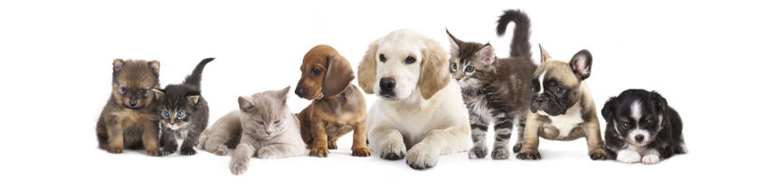 Pet Friendly Photo - Puppies and Kittens