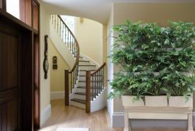 Modular Living Wall System