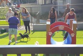 New Dog Park at Village Green