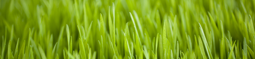 Sustainability - Green Grass Photo